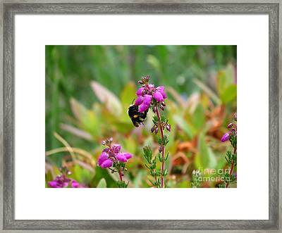 Nectar Quest Framed Print by Gayle Swigart