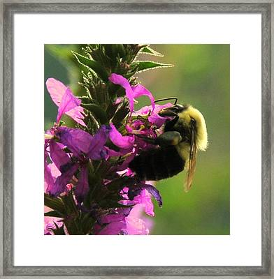 Nectar Time Framed Print by Aron Chervin