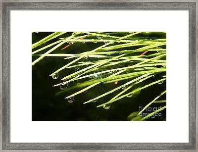 Needle Gems Framed Print