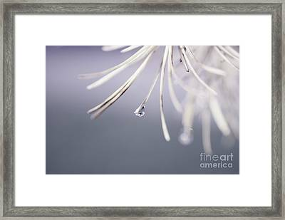 Neigerelle - 02b Framed Print by Variance Collections