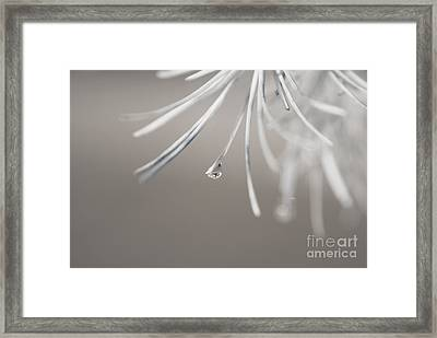 Neigerelle - 04-03b Framed Print by Variance Collections