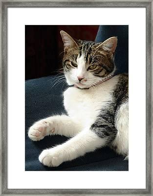Nellie Framed Print by Lisa Phillips