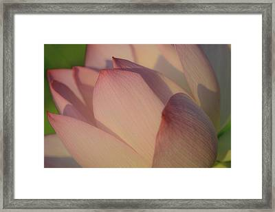 Nelumbo 'red Scarf' Framed Print