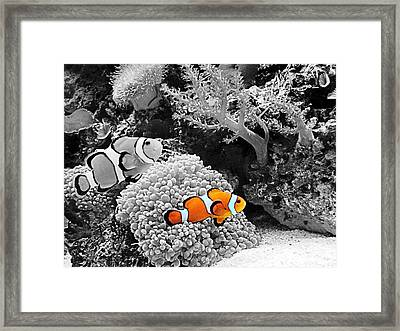 Nemo At Home Framed Print by Nick Kloepping