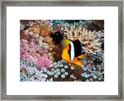 Nemo Framed Print by Jean Noren
