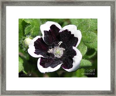 Framed Print featuring the photograph Nemophilia Named Penny Black by J McCombie
