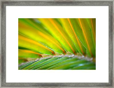 Neon Palm Framed Print by Kimberly Gonzales