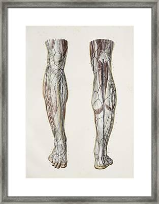Nerves Of The Lower Leg, 1844 Artwork Framed Print
