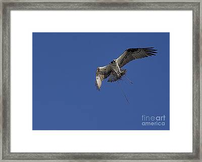 Framed Print featuring the photograph Nest Builder by Anne Rodkin