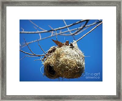 Nest For Rent Framed Print by Alexandra Jordankova