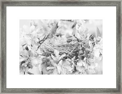 Nest In Black And White Framed Print by Stephanie Frey