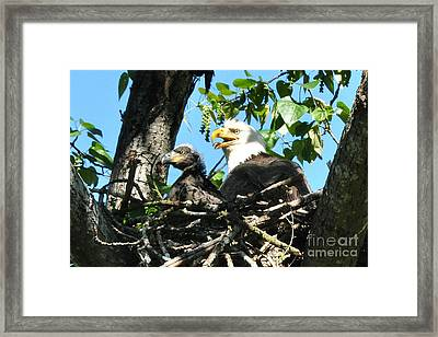 Framed Print featuring the photograph Nest by Jack Moskovita
