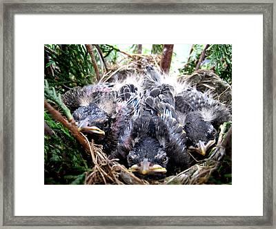Nest Framed Print by Leon Zernitsky