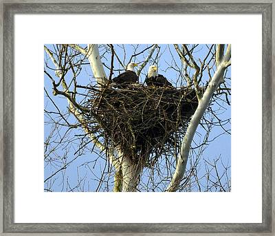 Framed Print featuring the photograph Nesting by Brian Stevens