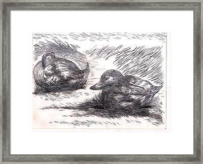Nesting Mallards Framed Print
