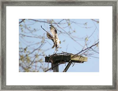 Nesting Material Framed Print