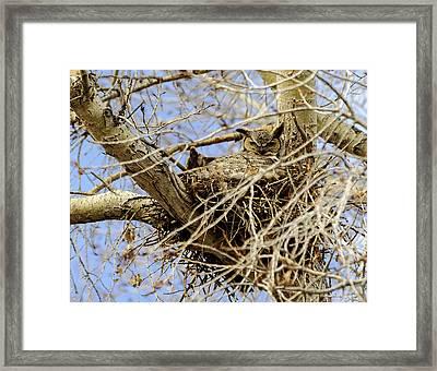 Nesting Owl  Framed Print by Stephen  Johnson