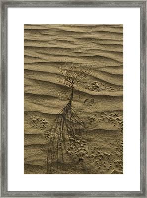 Nevada Dunes Framed Print