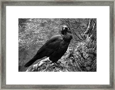 Nevermore - Black And White Framed Print