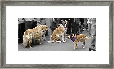 Framed Print featuring the photograph New Bandana by Tom Dickson