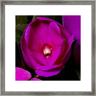 New Bloom Framed Print
