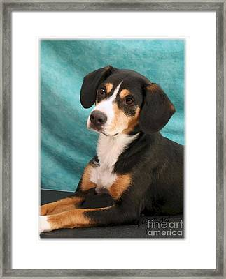 New Breed Entlebucher Pup Framed Print by Maxine Bochnia