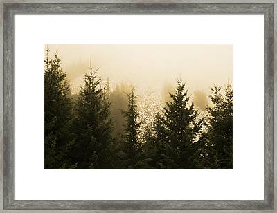 New Dawn Framed Print by Terrie Taylor