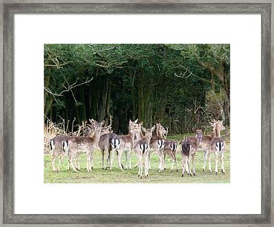 New Forest Deer Framed Print by Karen Grist