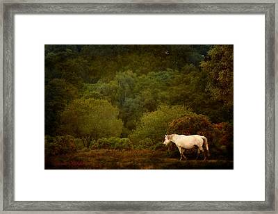 New Forest Walk Framed Print by Dorota Kudyba