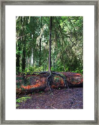 New Growth Framed Print by Anthony Jones
