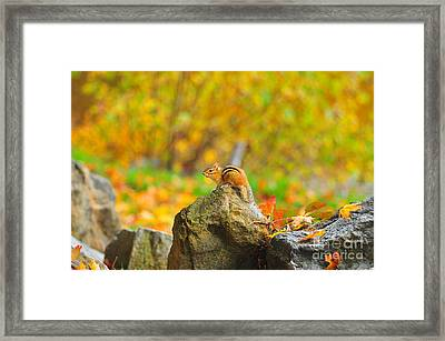 New Hampshire Chipmunk Framed Print by Catherine Reusch Daley