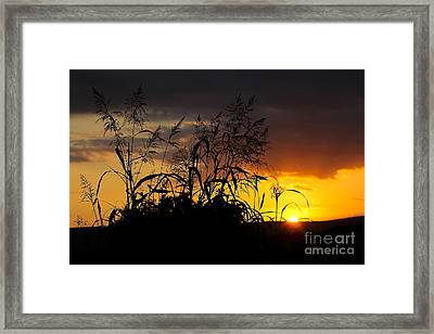 Framed Print featuring the photograph New Image by Everett Houser