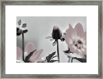Framed Print featuring the digital art New Life by Holly Ethan
