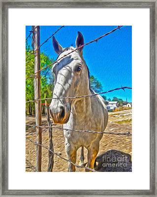 New Mexico Horse Framed Print by Gregory Dyer