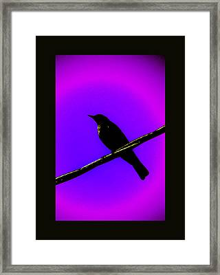 Framed Print featuring the photograph New Mu Robin by Susanne Still