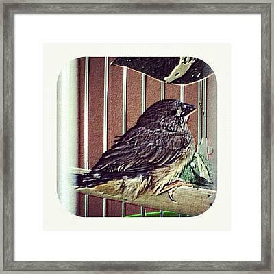 #new To This #world #baby #bird #birdie Framed Print
