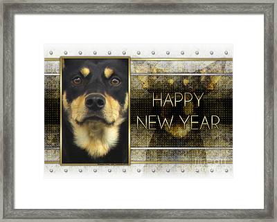 New Year - Golden Elegance Australian Kelpie Framed Print by Renae Laughner