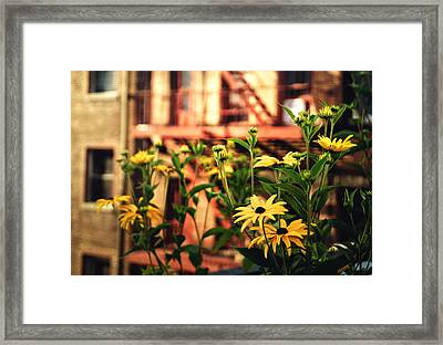 New York City Flowers Along The High Line Park Framed Print by Vivienne Gucwa
