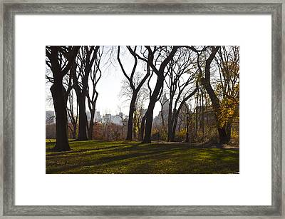 New York Trees Framed Print by Snow  White