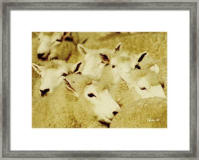 New Zealand Series - Paddock Parade Framed Print by Jim Pavelle
