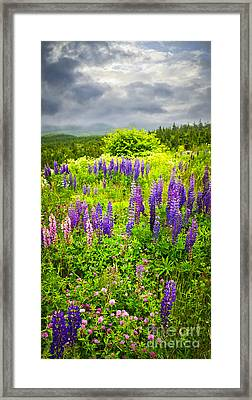 Newfoundland Meadow Framed Print by Elena Elisseeva