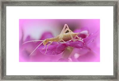 Newly Hatched Insect Framed Print by Maureen  McDonald