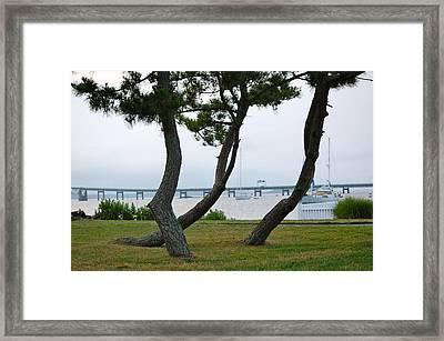 Newport Ri Evergreen Characters Framed Print