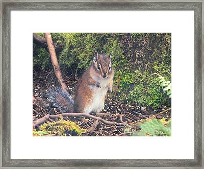 Newport Squirrel Framed Print