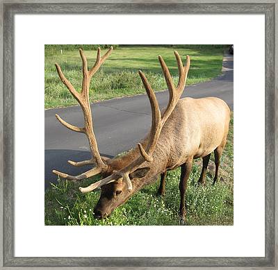 Nice Rack Framed Print