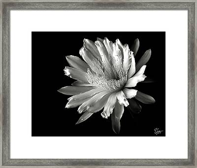 Night Blooming Cereus In Black And White Framed Print