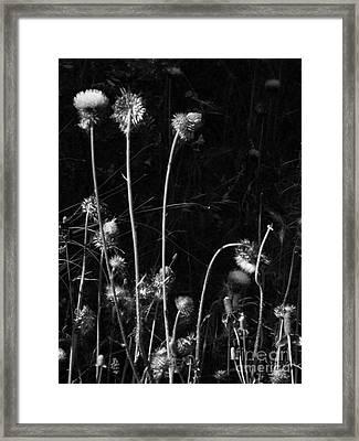 Night Dance Framed Print by Joe Jake Pratt
