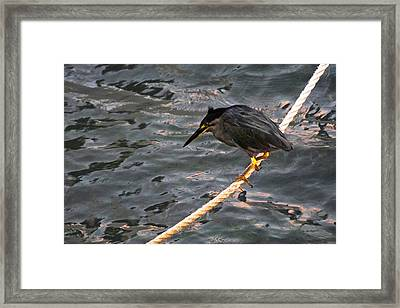 Night Fishing Framed Print by Jocelyn Kahawai