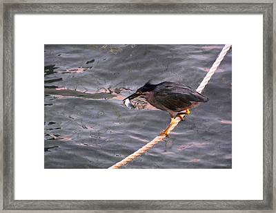 Night Fishing 2 Framed Print by Jocelyn Kahawai