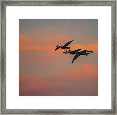 Night Flight Framed Print by Joshua Dwyer